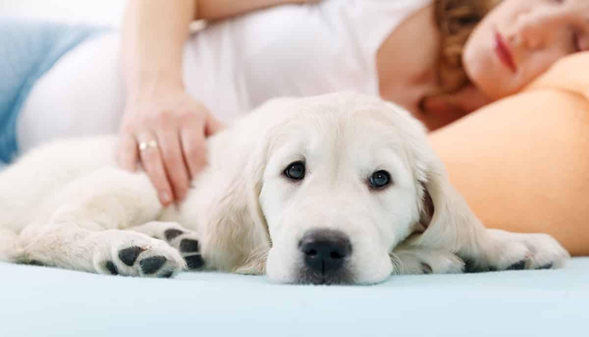 Voelen huisdieren dat je zwanger bent
