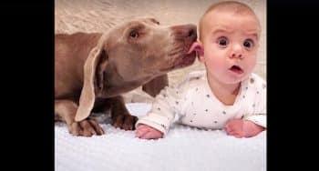baby's en honden