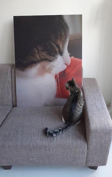bestecanvasnl fotoafdruk huisdier