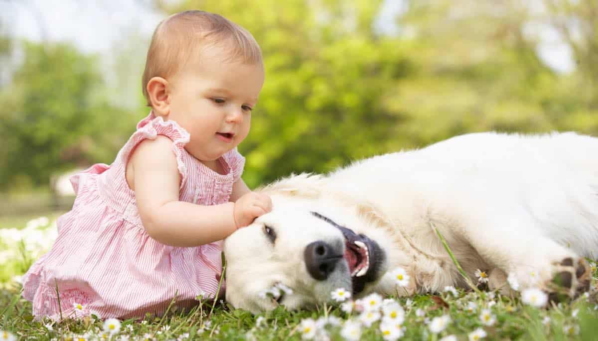 hoe hond voorbereiden op de komst van een baby