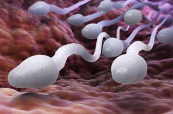 hoe lang blijven zaadcellen in leven
