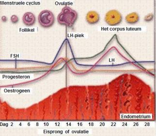 je cyclus menstruele cyclus
