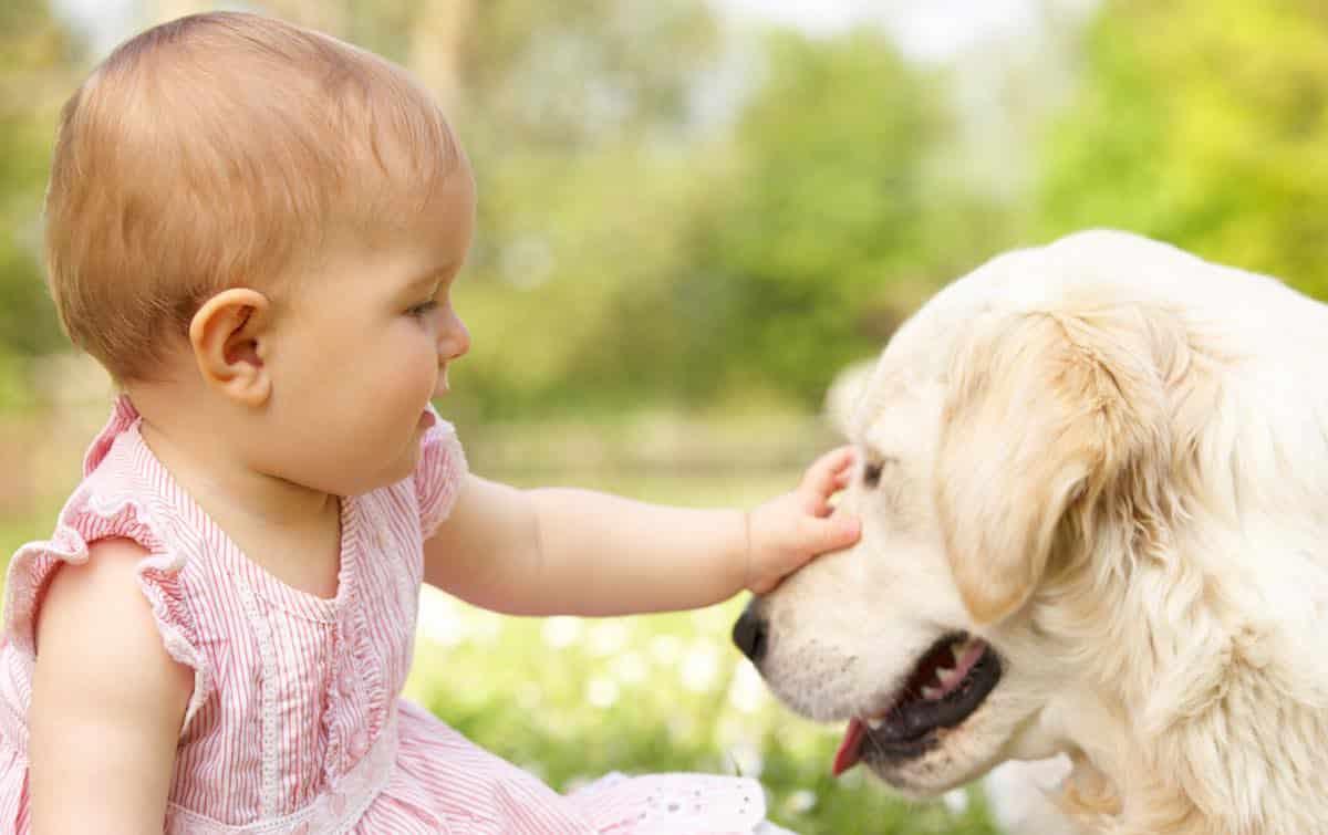 tips voor honden en baby