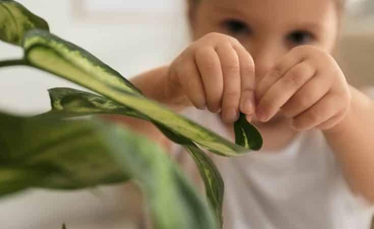 welke kamerplanten zijn gevaarlijk giftig voor kinderen